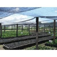 Plástico para invernadero o agrolene