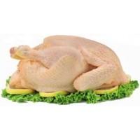 Pollo y Gallina 100% Criolla