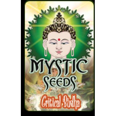 Critical Budha